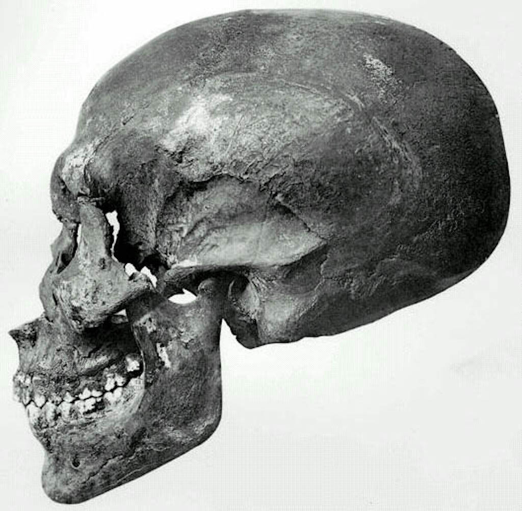 The skull of the mummy in Tomb 55.