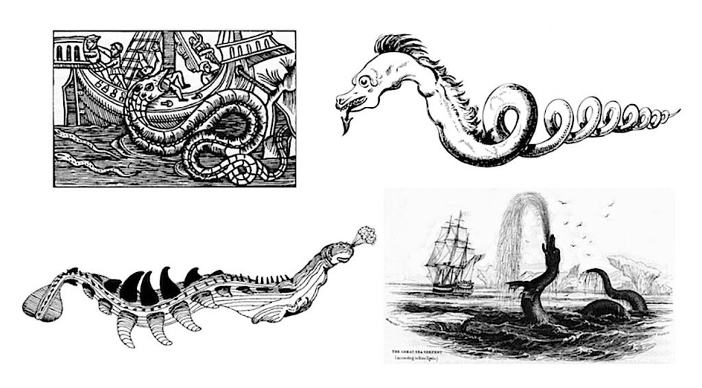 Cadborosaurus is purportedly a cryptid sea serpent which has many descriptions. Image compilation: Historic Mysteries.