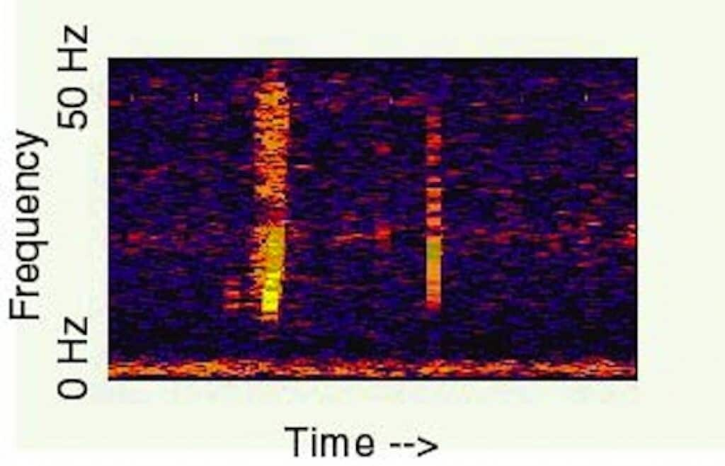 The Bloop Spectrogram courtesy of the NOAA.