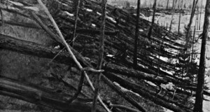A photo of the toppled trees at Tunguska