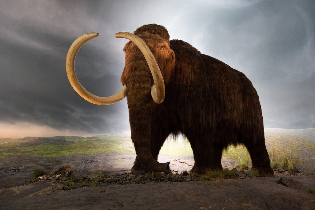 A model of a Woolly Mammoth.
