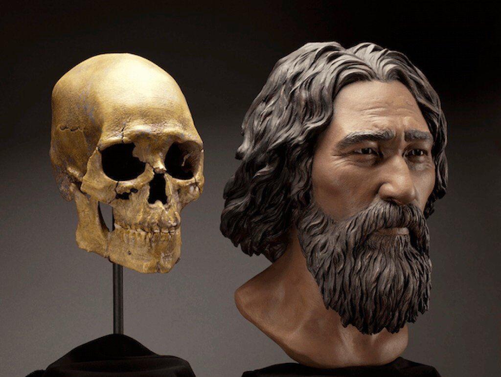 Facial reconstruction of the Kennewick Man.