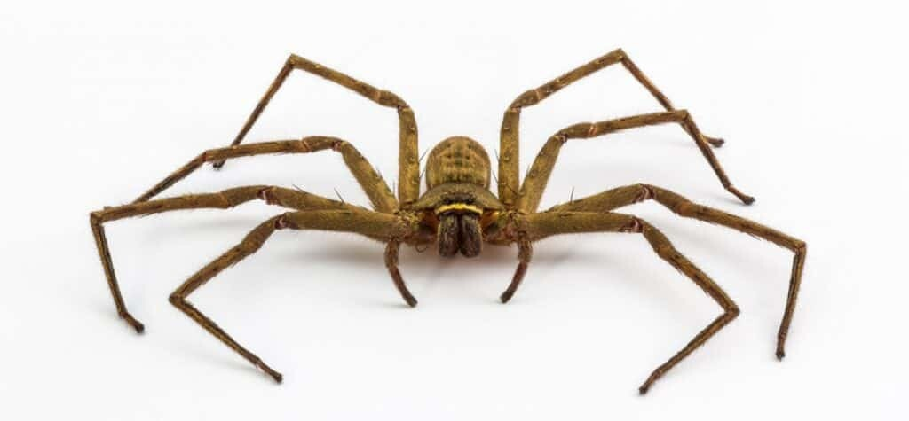 Was the giant spider a product of the Chernobyl Nuclear Plant disaster? Image credit: canstockphoto.
