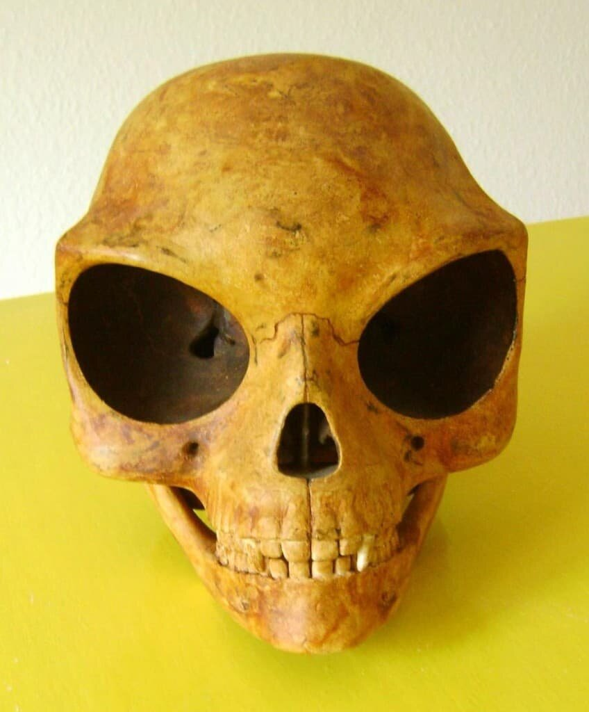 The Sealand Skull was discovered in July 2007. Image credit: © Anton spangenberg