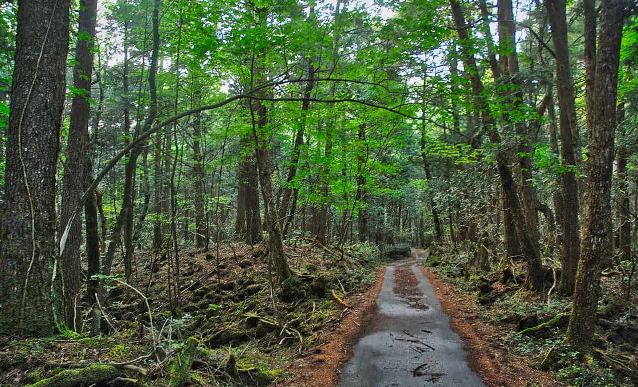 Aokigahara forest is also known as the Suicide Forest.