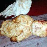 Chimera goat human baby