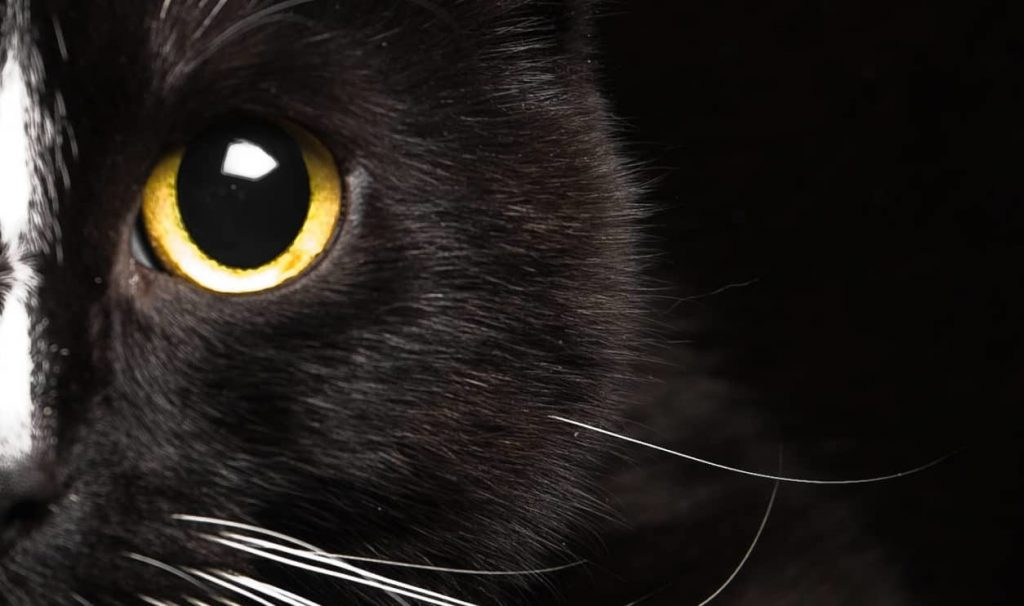 Black Cat Superstition Good And Bad Luck Beliefs Historic Mysteries
