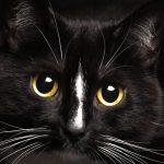 black cat superstition