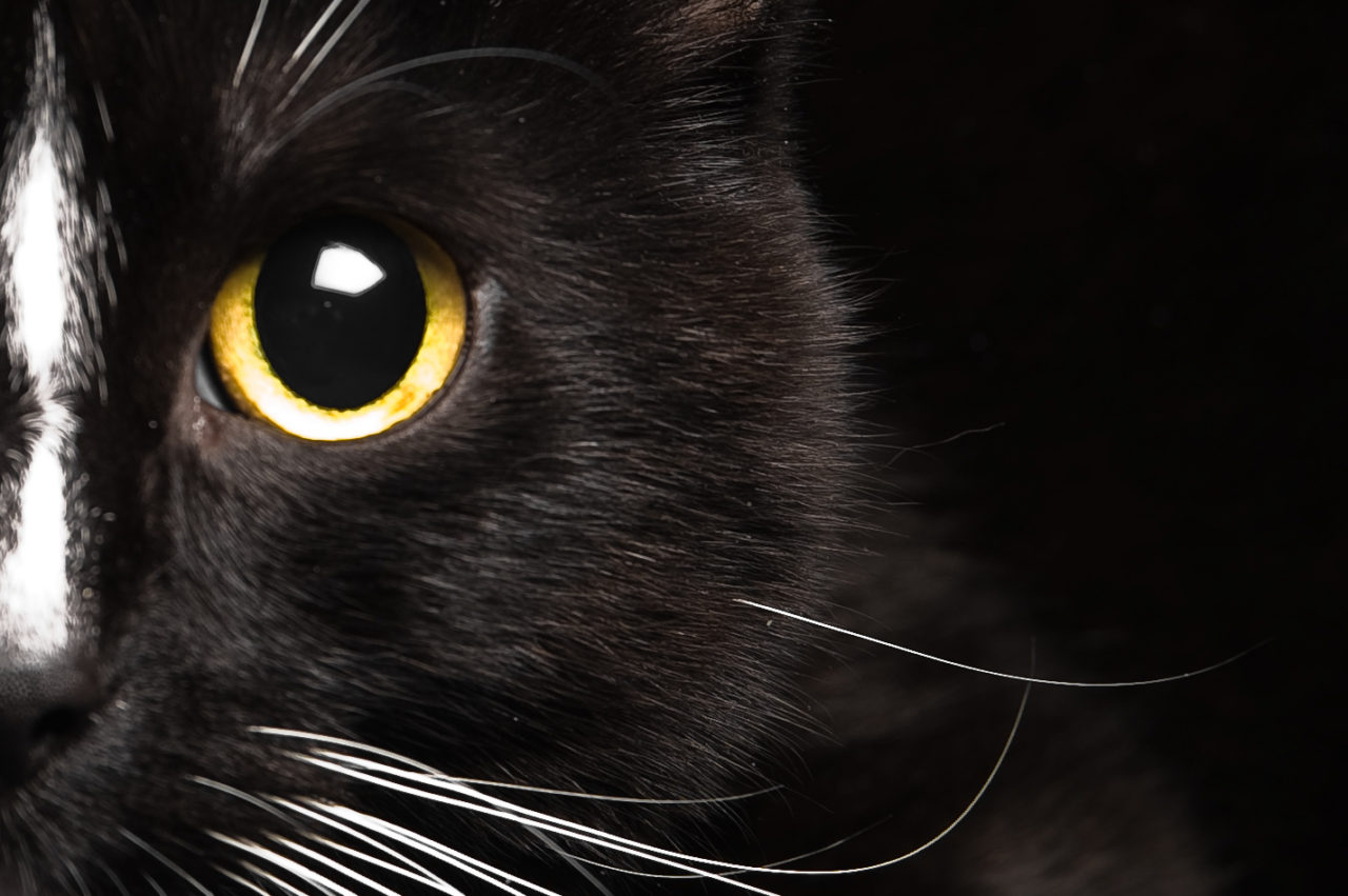 Black Cat Superstition: Good and Bad Luck Beliefs | Historic