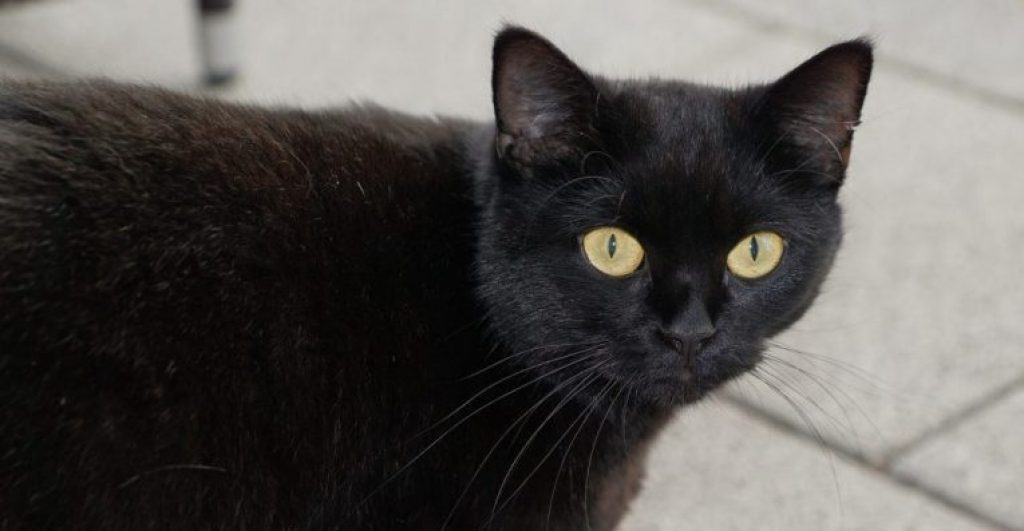 What The Superstition About Black Cats