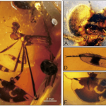 fossilized damselfly parts in amber
