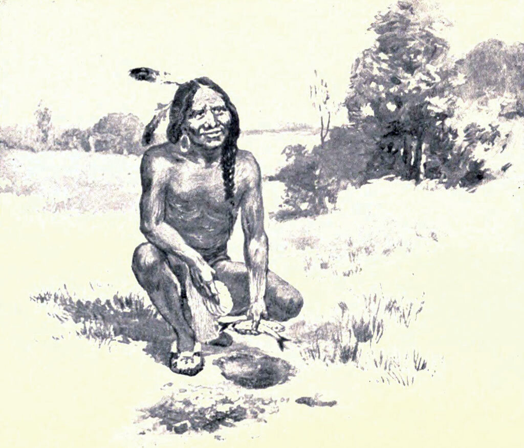 A 1911 illustration showing Squanto (Tisquantum) teaching colonists how to plant maize using fish as fertilizer.