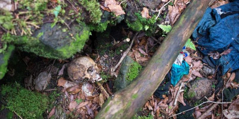 Reasons for the Macabre Trend in the Suicide Forest of Aokigahara