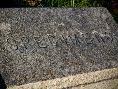 Creepy Graves and The Stories Behind Them