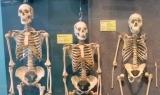 Evolution vs Creationism Argument