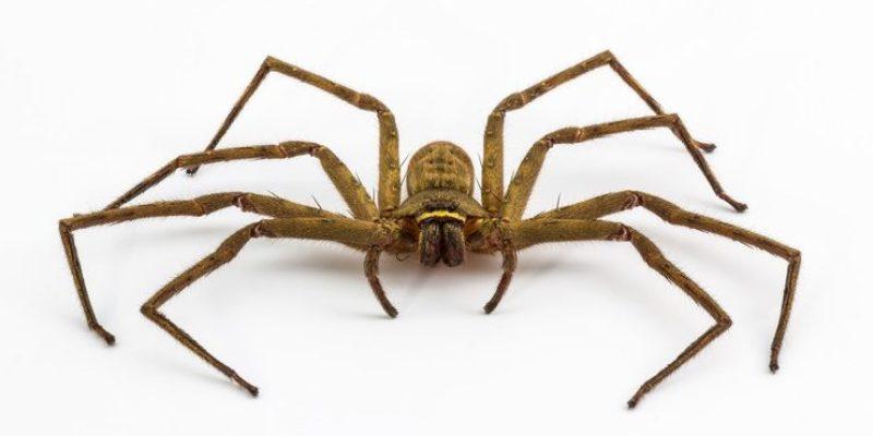 Ukraine's Mutant Spider