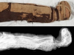 Ancient Egyptian Animal Mummies