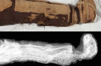 Ancient Egyptian Animal Mummies