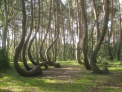 Crooked Forest of Poland is a Mystery of 400 Bent Trees