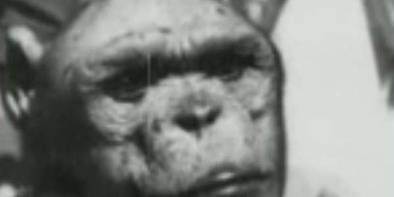 Genetically Engineering a Humanzee Hybrid