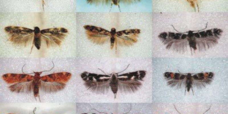 New Species of Moths, Corals, and Sponges