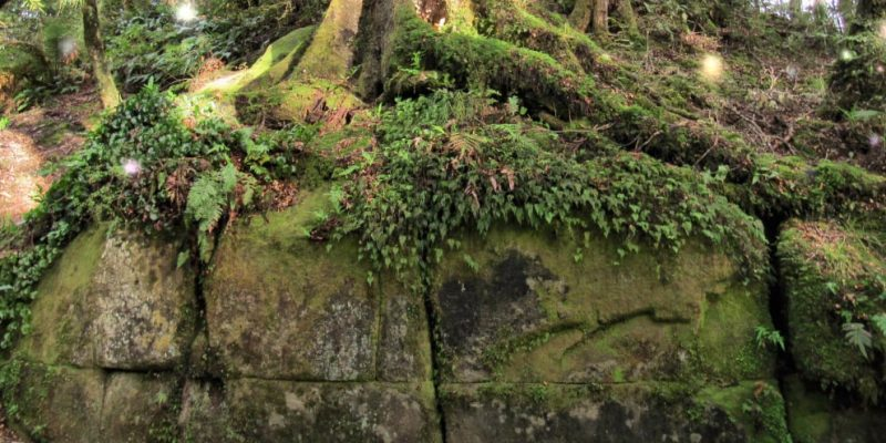 Does the Kaimanawa Wall Re-Write New Zealand's History?