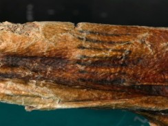 Ancient Tattoos of Ötzi and El Morro Man