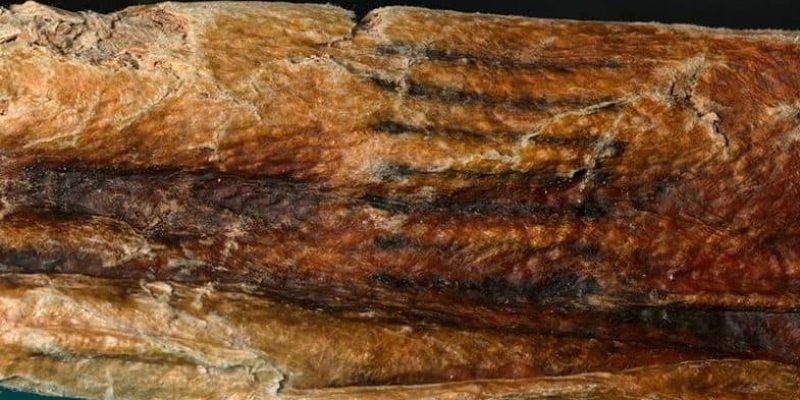 Ancient Tattoos of Ötzi and El Morro Man