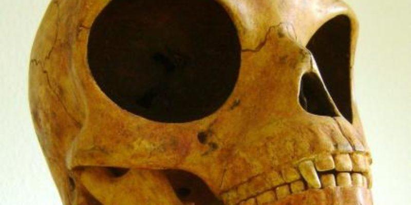 The Sealand Skull